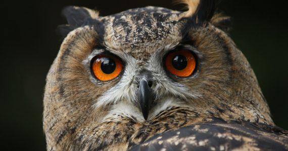 Owl looking wise