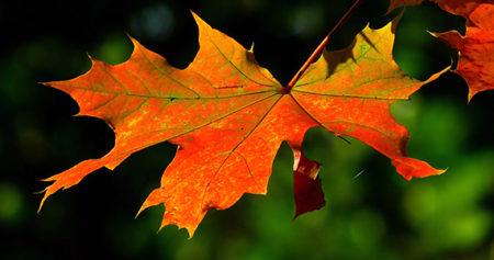 Autumn leaf on a tree