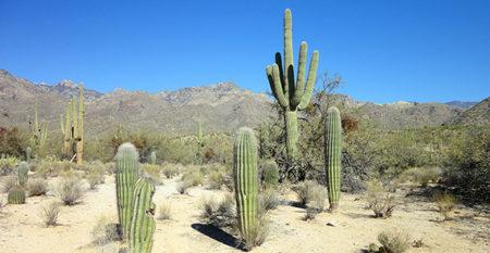 Desert in Tucson, Arizona
