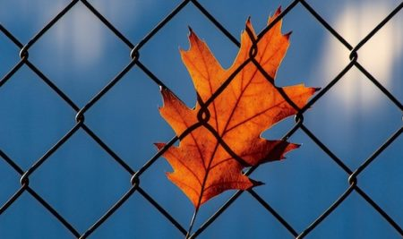 Leaf against a chain link fence